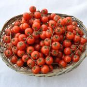 cesto-pomodorini