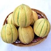 cesto-meloni
