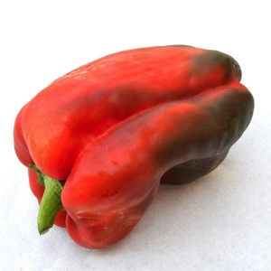 peperone-rosso