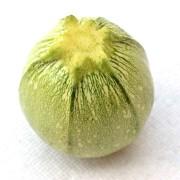zucchina-tonda