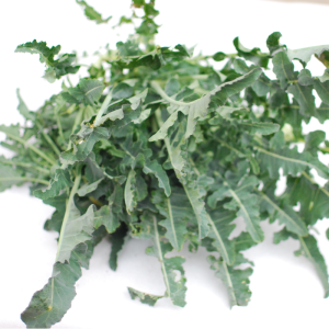 broccolo fiolaro 1