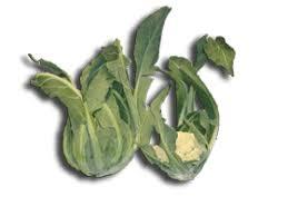 broccolo di bassano