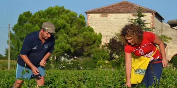 coltivazione verdure dell'orto