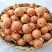 cesto-cipolle-gialle
