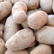 dettaglio-patate