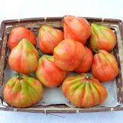 cesto-pomodori-cuore-di-bue