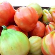 pomodori-cuore-di-bue