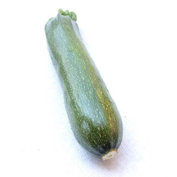 zucchina