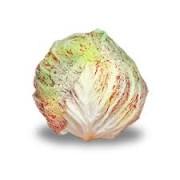 radicchio variegato 1